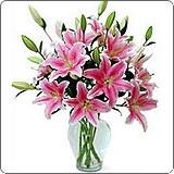 高雅瓶花(鲜切花)